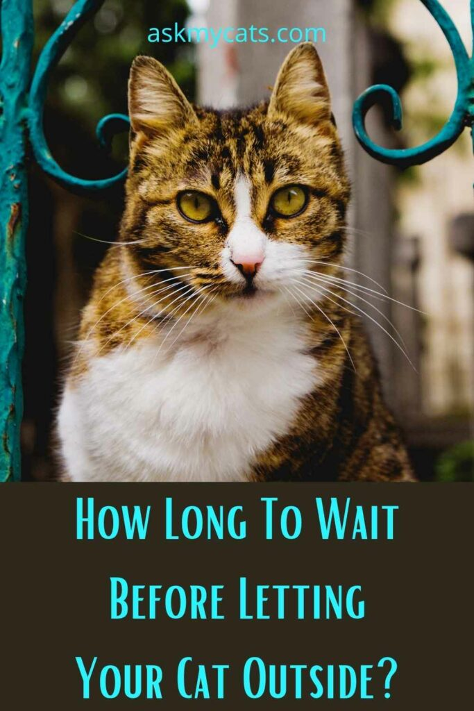 How Long To Wait Before Letting Your Cat Outside?
