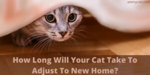 How Long Will Your Cat Take To Adjust To New Home?