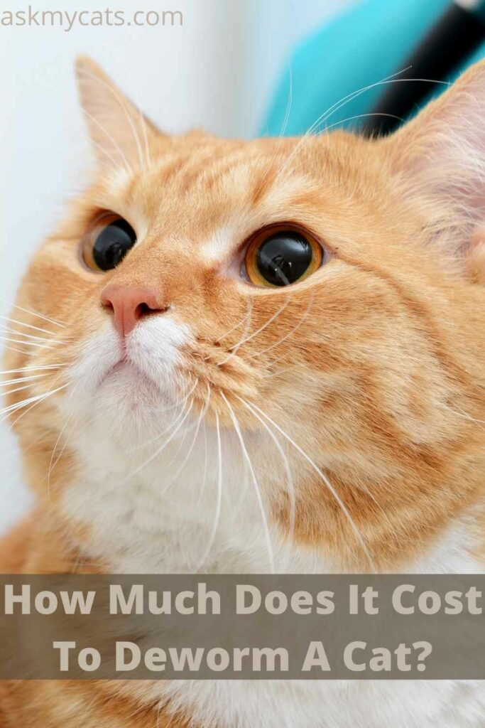 How Much Does It Cost To Deworm A Cat?