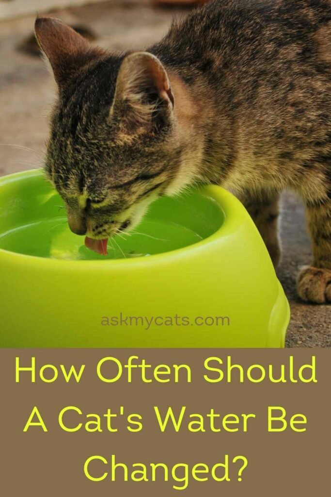 How Often Should A Cat's Water Be Changed?