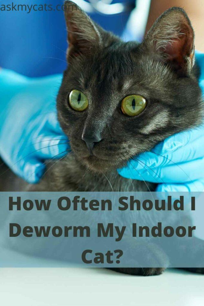 How Often Should I Deworm My Indoor Cat?