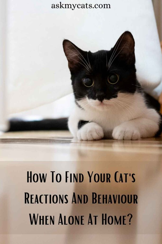 How To Find Your Cat's Reactions And Behaviour When Alone At Home?