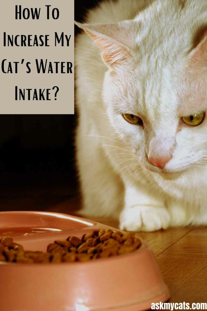 How To Increase My Cat's Water Intake?