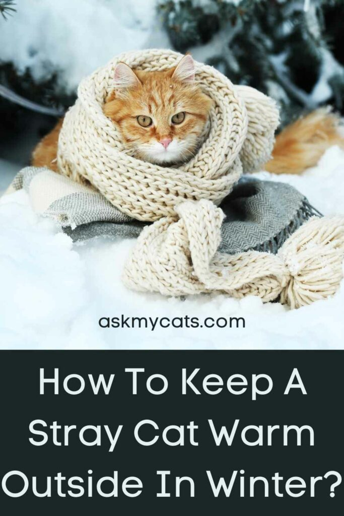 How To Keep A Stray Cat Warm Outside In Winter?