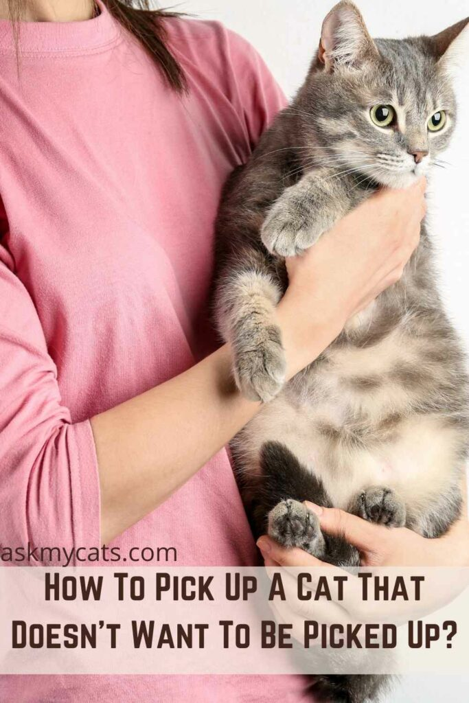 How To Pick Up A Cat That Doesn't Want To Be Picked Up?