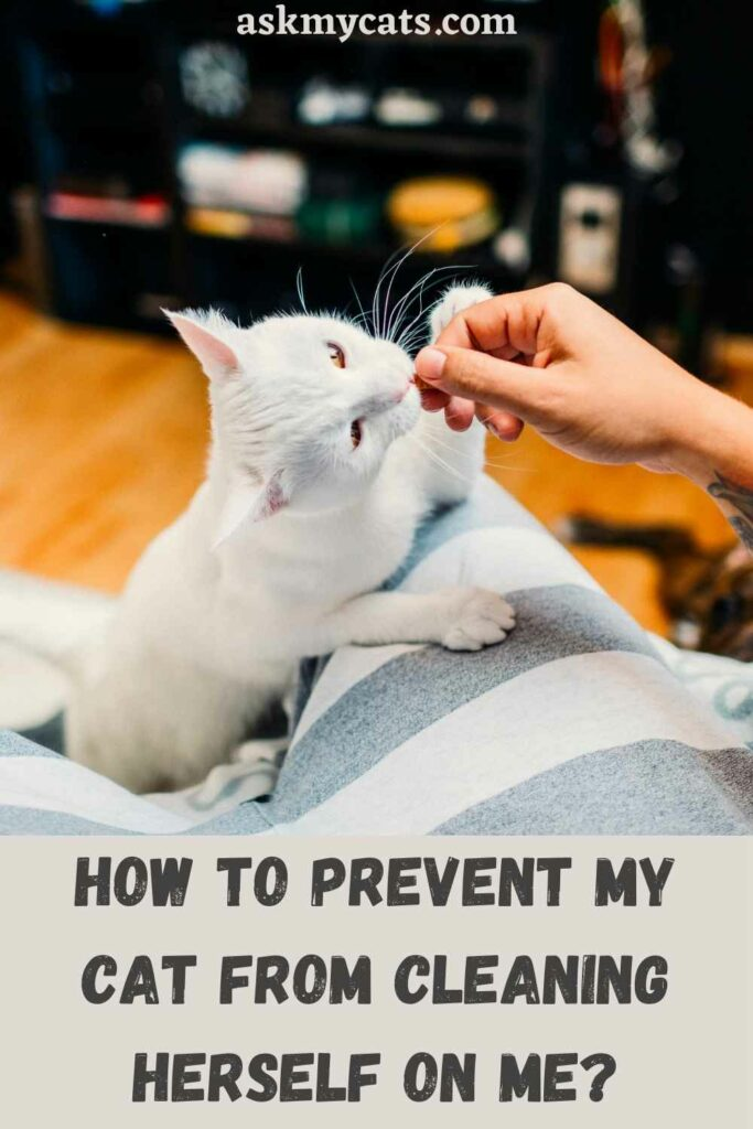 How To Prevent My Cat From Cleaning Herself On Me?