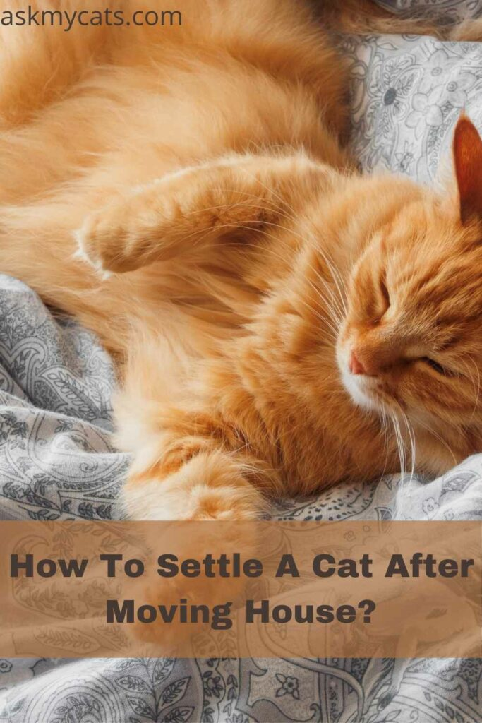 How To Settle A Cat After Moving House?