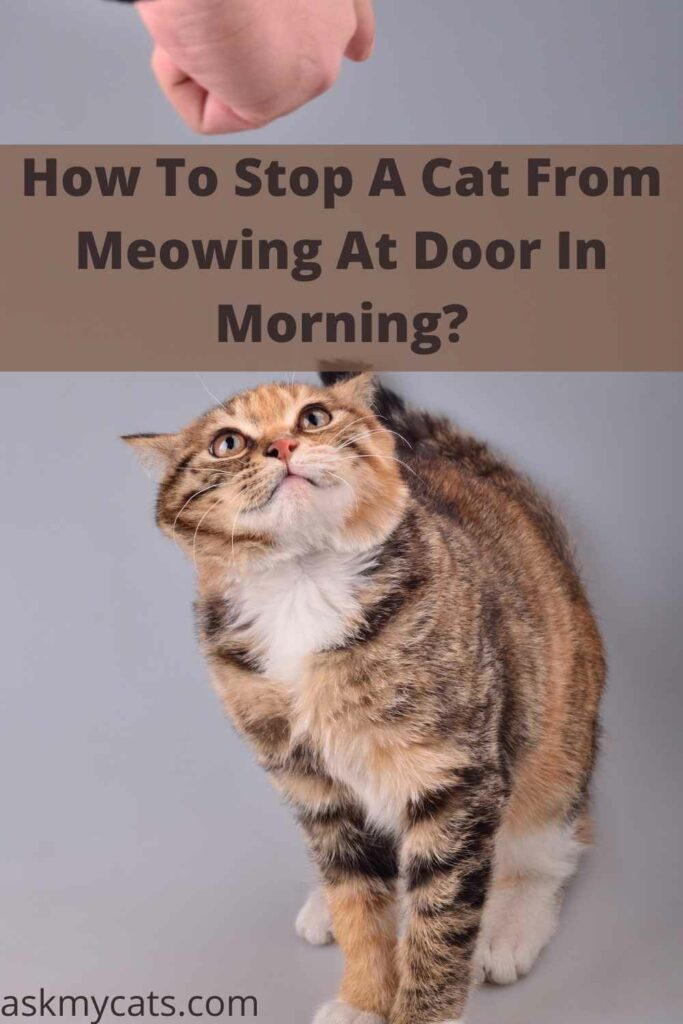 How To Stop A Cat From Meowing At Door In Morning?
