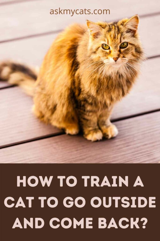 How To Train A Cat To Go Outside And Come Back?