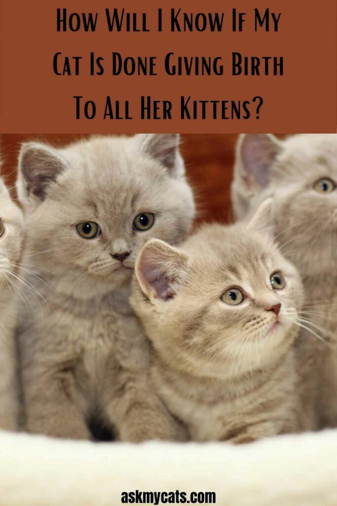 How Will I Know If My Cat Is Done Giving Birth To All Her Kittens?