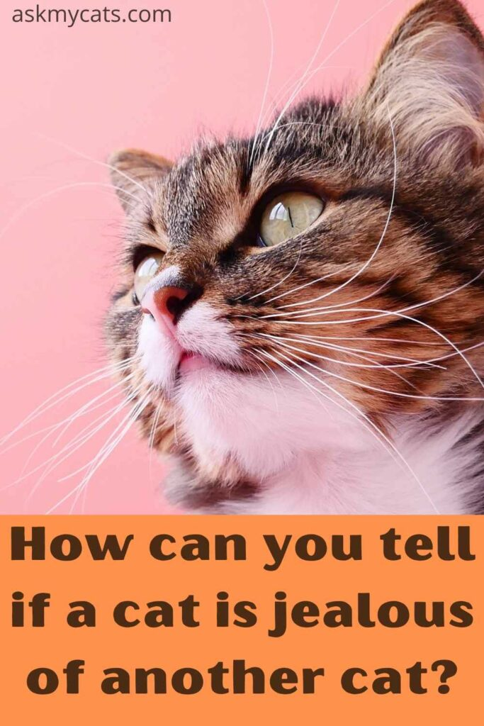 how can you tell if a cat is jealous of another cat?