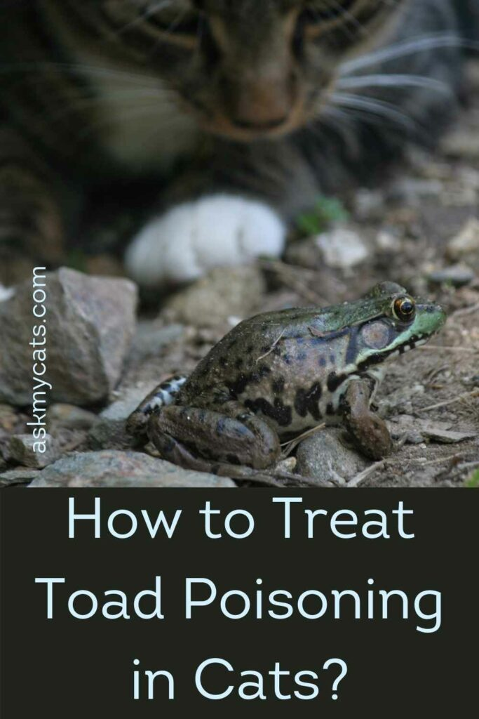 How to Treat Toad Poisoning in Cats?