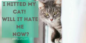 I Hit My Cat! Will It Hate Me Now?