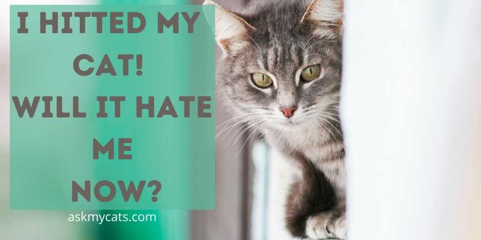 I Hitted My Cat! Will It Hate Me?
