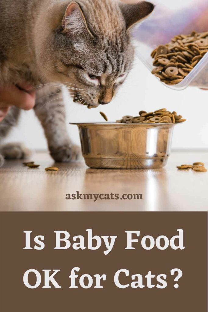 Is Baby Food OK for Cats?