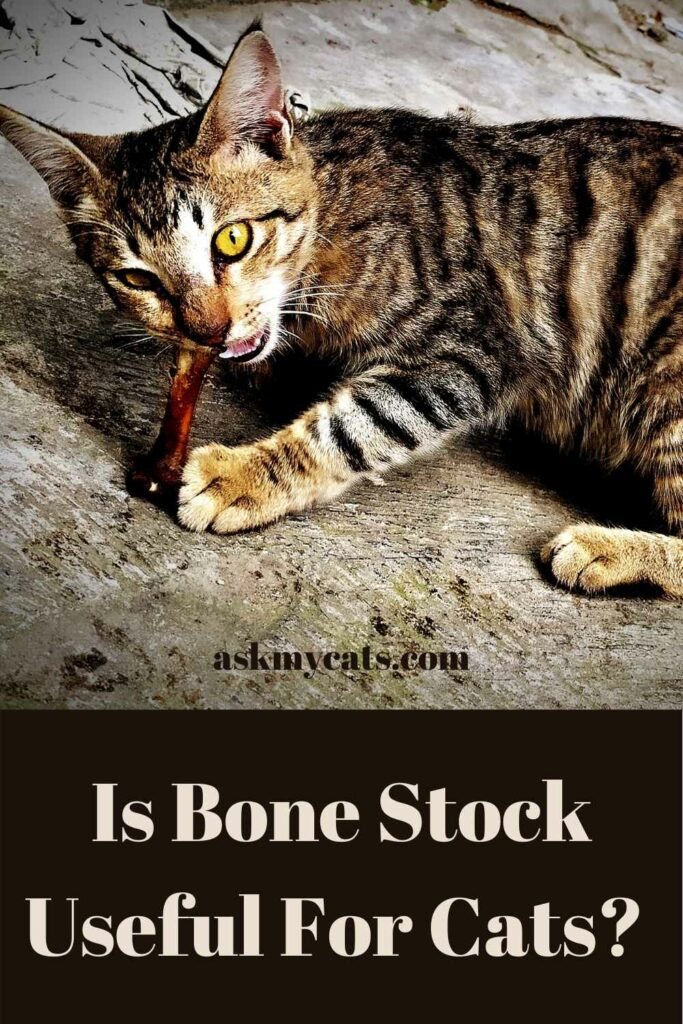 Is Bone Stock Useful For Cats?