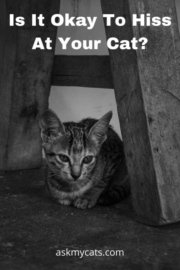 Is It Okay To Hiss At Your Cat?