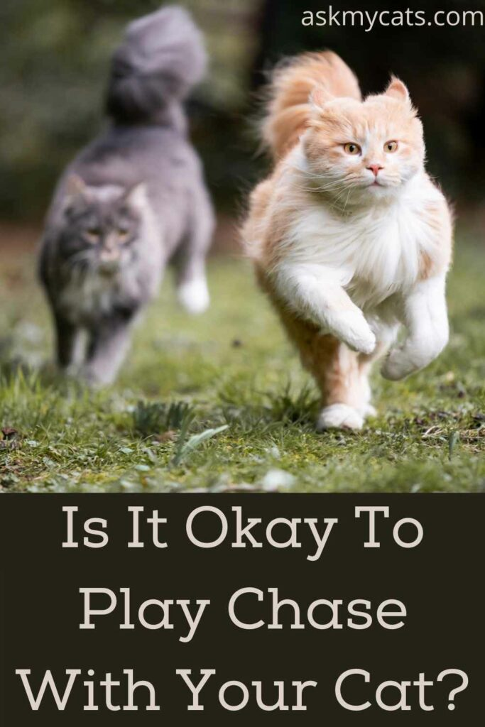 Is It Okay To Play Chase With Your Cat?