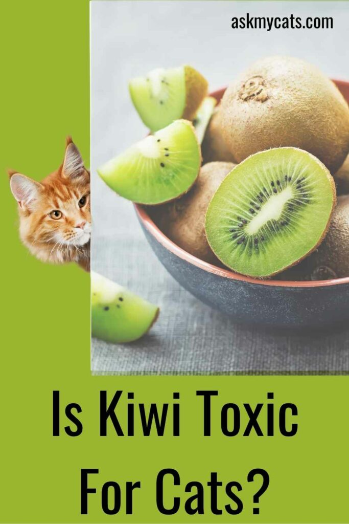 Is Kiwi Toxic For Cats?