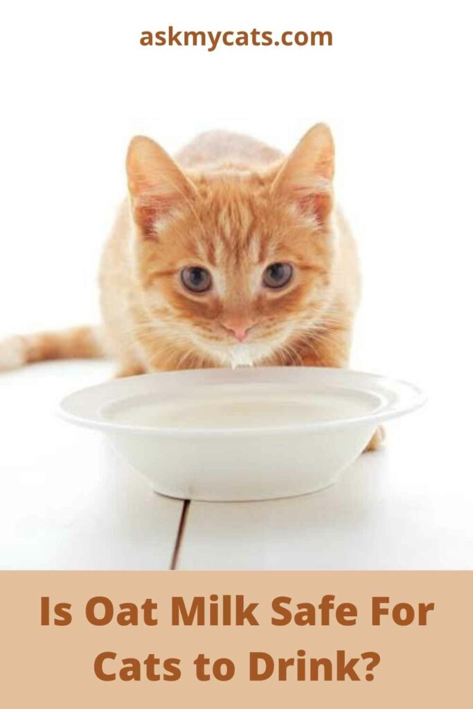 Is Oat Milk Safe For Cats to Drink?