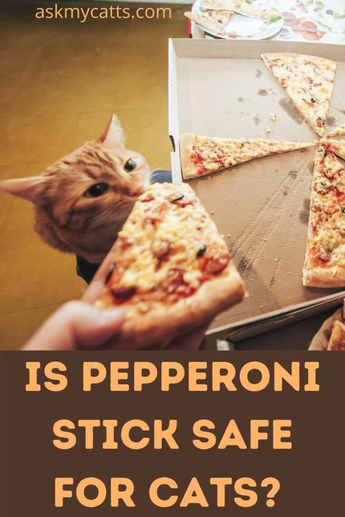 Is Pepperoni Stick Safe For Cats?