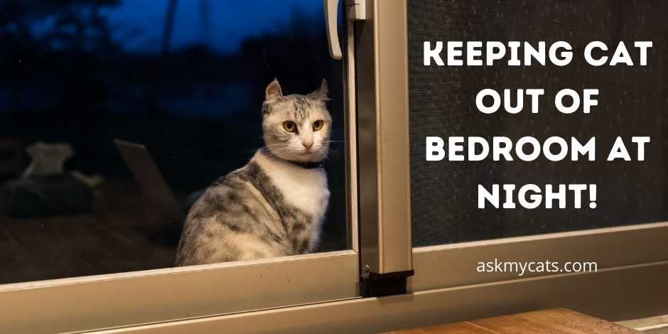 Keeping Cat Out Of Bedroom At Night