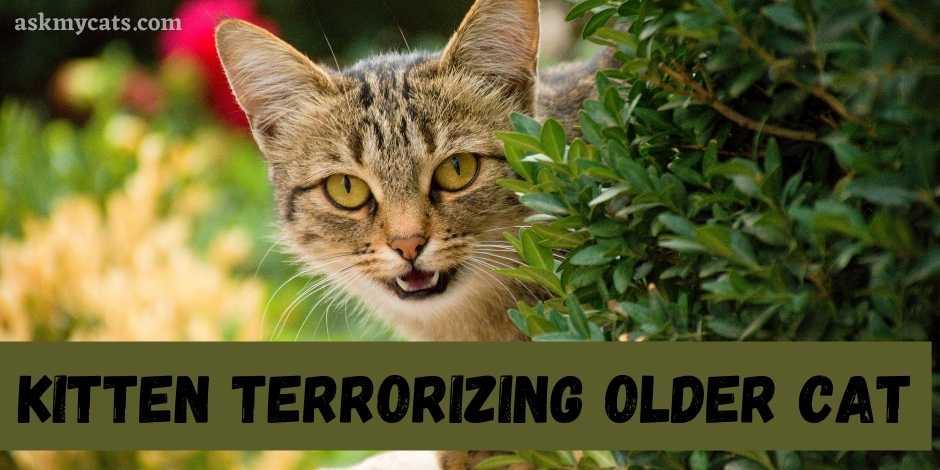 Kitten Terrorizing Older Cat