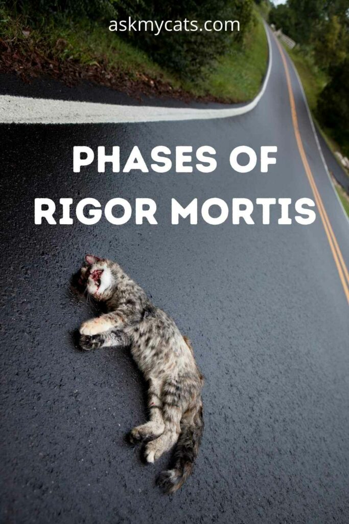 Phases of Rigor Mortis