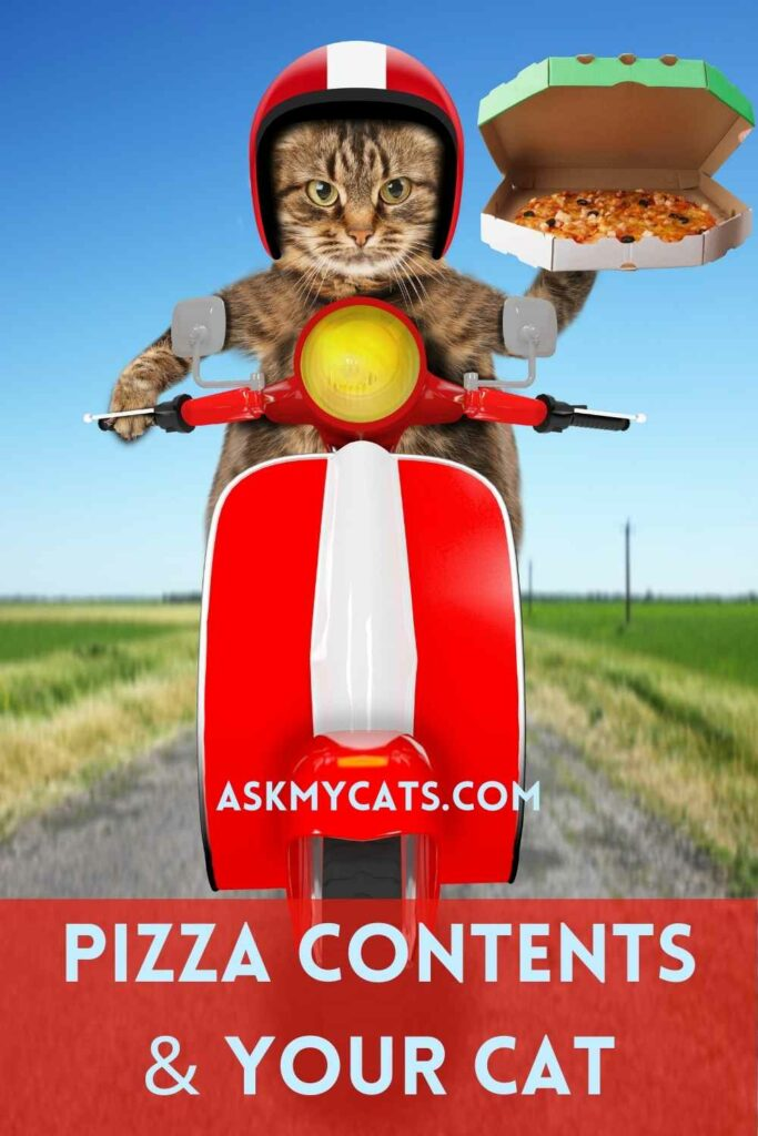 Pizza Contents & Your Cat