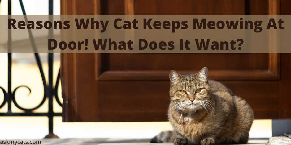 Reasons Why Cat Keeps Meowing At Door! What Does It Want?