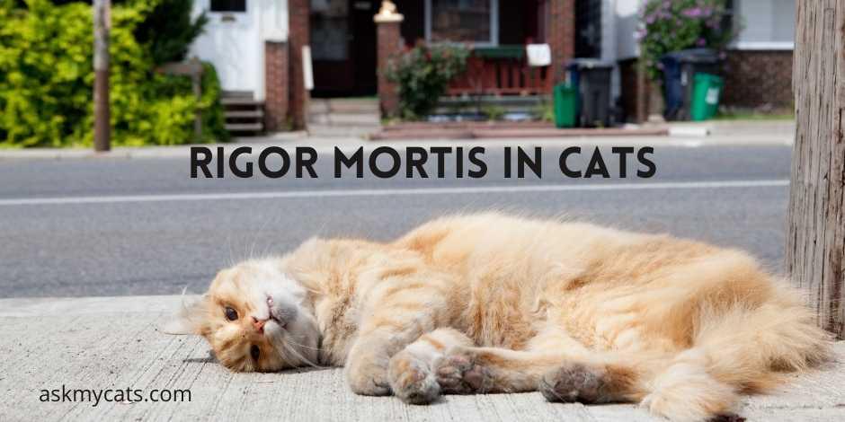 Rigor Mortis In Cats