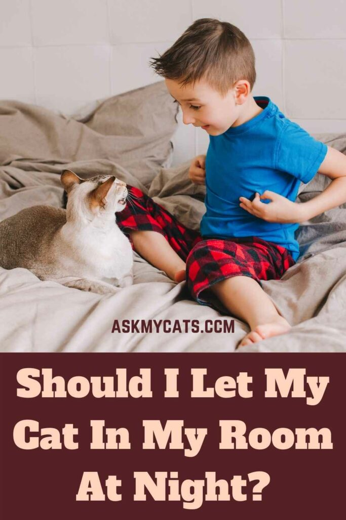 Should I Let My Cat In My Room At Night?