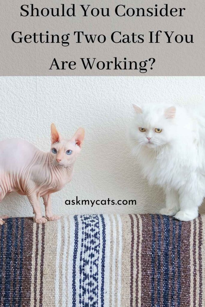 Should You Consider Getting Two Cats If You Are Working?