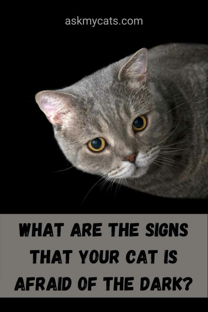 What Are The Signs That Your Cat Is Afraid Of The Dark?