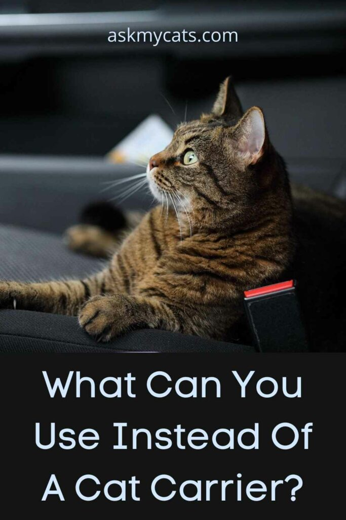 What Can You Use Instead Of A Cat Carrier?