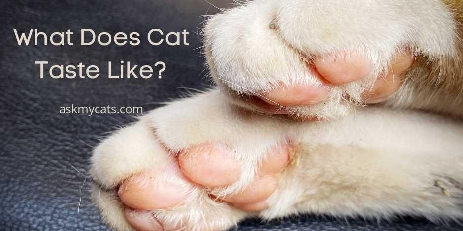 What Does Cat Taste Like