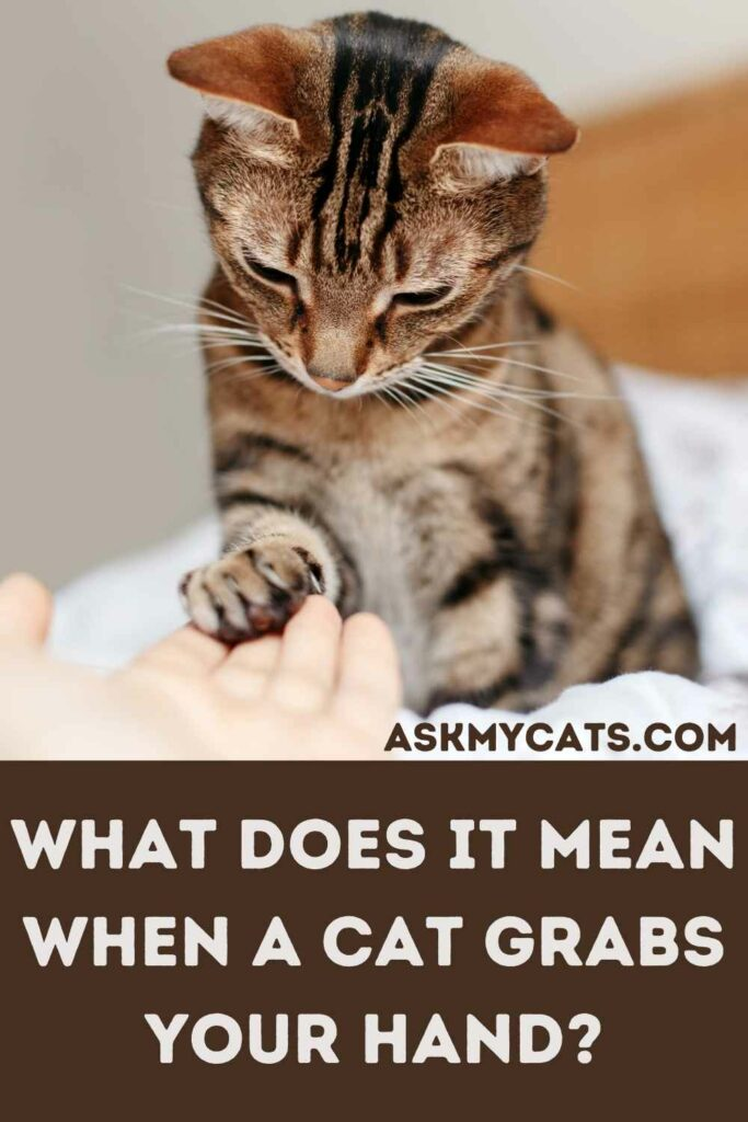 What Does It Mean When A Cat Grabs Your Hand?