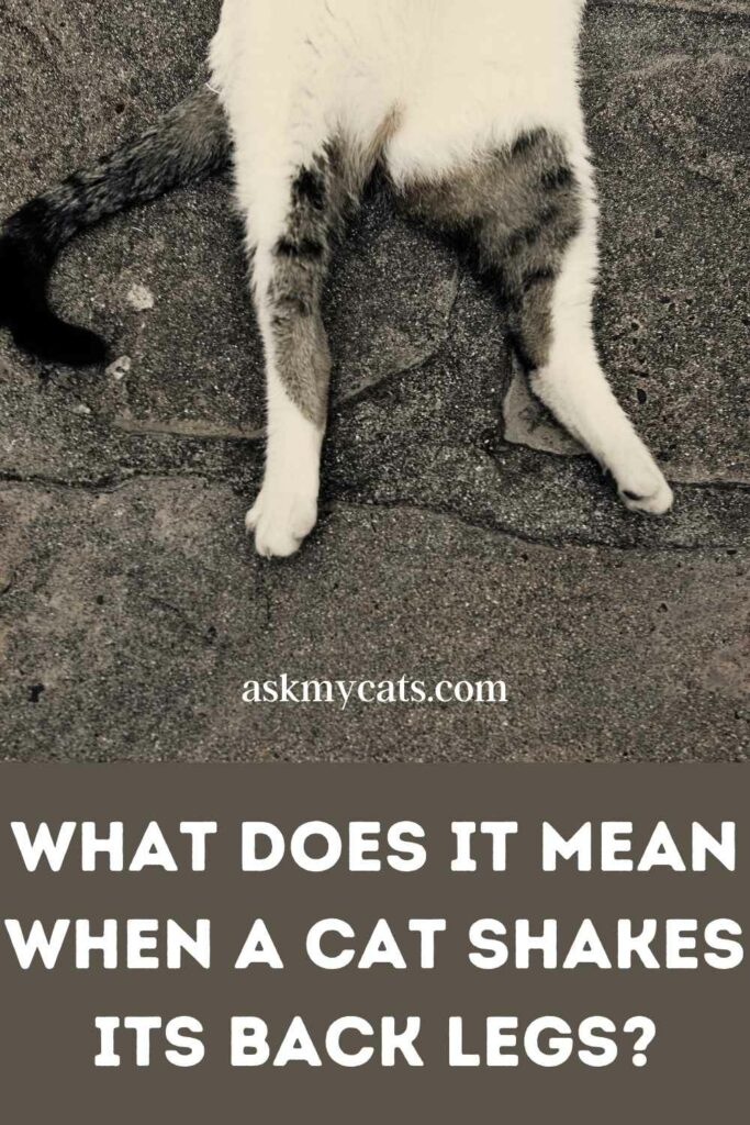 What Does It Mean When A Cat Shakes Its Back Legs?