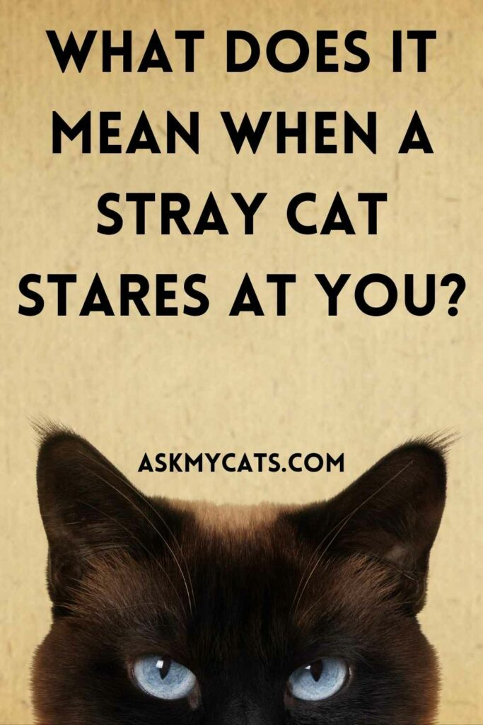 What Does It Mean When A Stray Cat Stares At You?