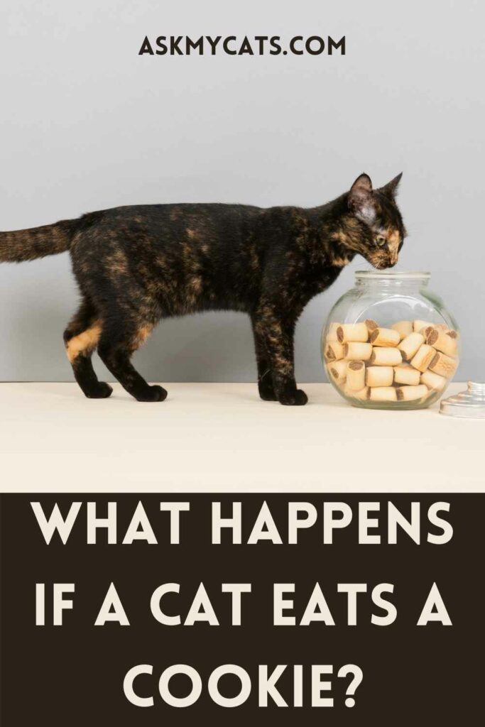 What Happens If A Cat Eats A Cookie?
