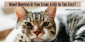 What Happens If You Stare A Cat In The Eyes? Why You Should Ignore Doing This?