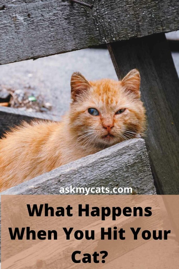 What Happens When You Hit Your Cat?