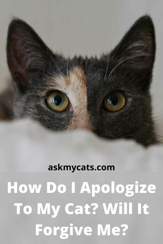How Do I Apologize To My Cat? Will It Forgive Me?