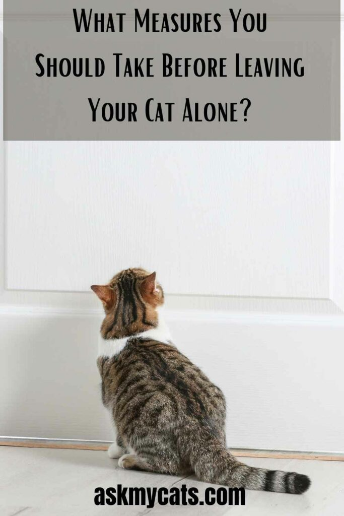 What Measures You Should Take Before Leaving Your Cat Alone