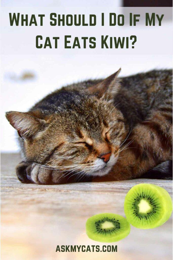 What Should I Do If My Cat Eats Kiwi?