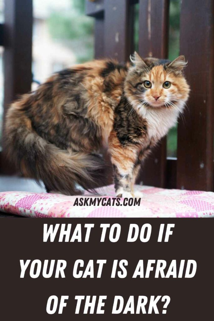 What To Do If Your Cat Is Afraid Of The Dark?
