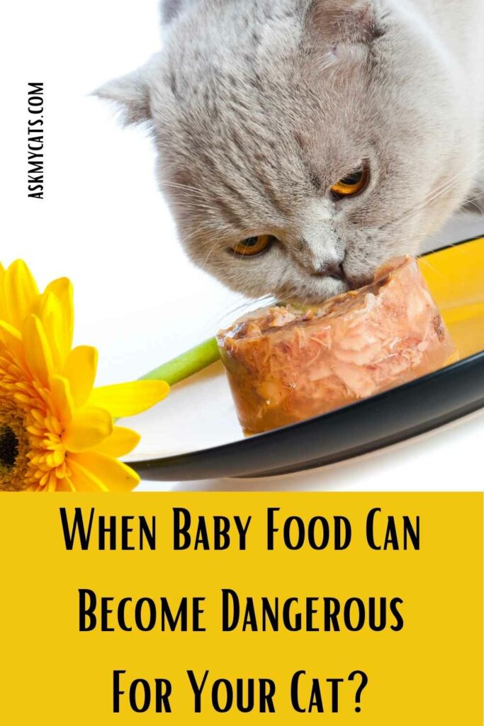 When Baby Food Can Become Dangerous For Your Cat?