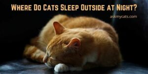 Where Do Cats Sleep Outside at Night? Are They Comfortable There?