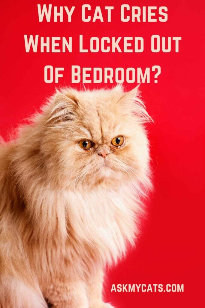 Why Cat Cries When Locked Out Of Bedroom?