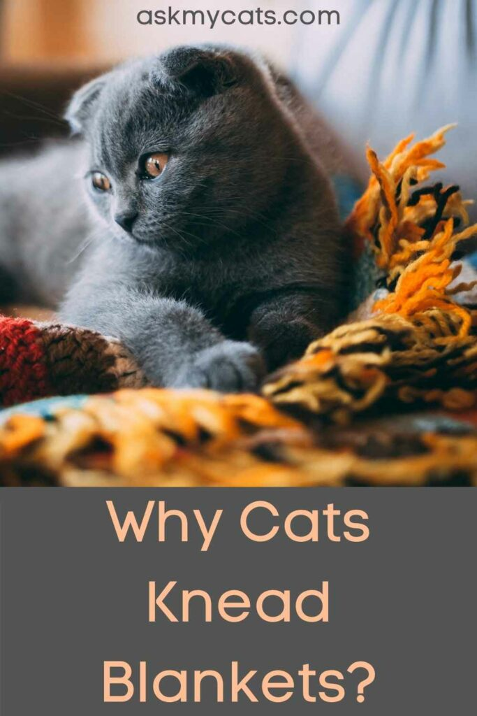 Why Cats Knead Blankets?